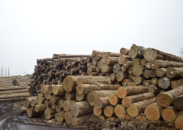 解读建筑木方生产加工做变软解决的流程及夏天维护保养方式
