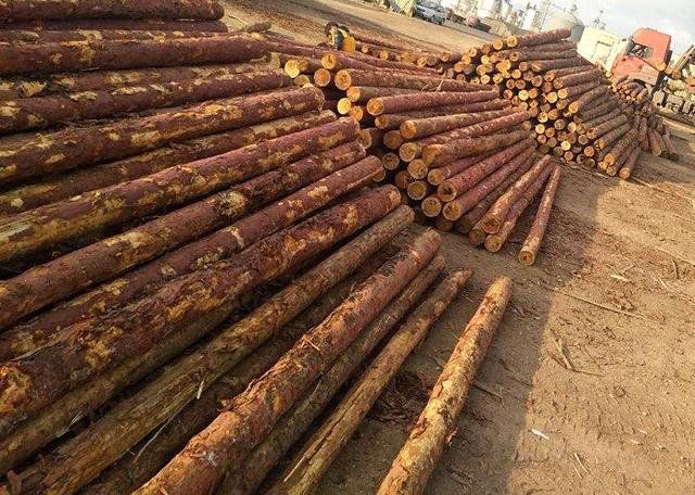 怎样评定施工工地建筑木方的优劣?